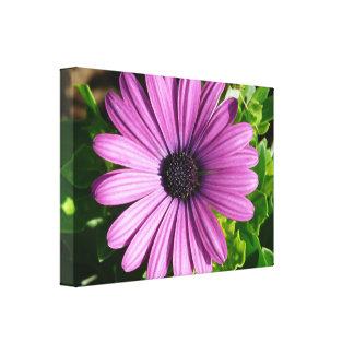 Big violet gerbera canvas print