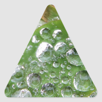 Big waterdrops on green leaves triangle sticker