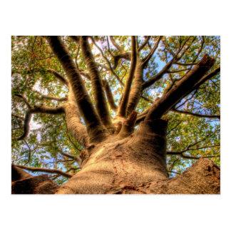 Big Wise Tree Postcard