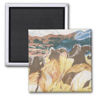 Bighorn Sheep Fridge Magnet