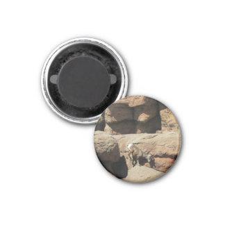 Bighorn Sheep Refrigerator Magnets