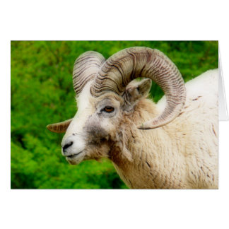 Bighorn Sheep - Male with Big Horns Greeting Card