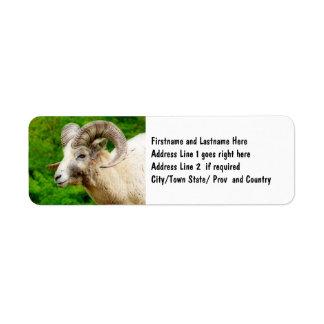 Bighorn Sheep - Male with Big Horns Return Address Label