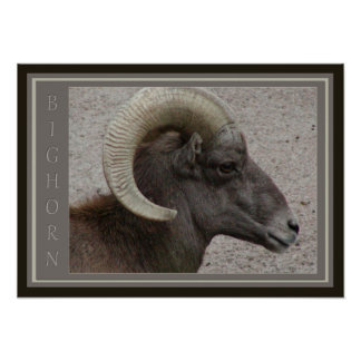 Bighorn Sheep Wildlife Poster