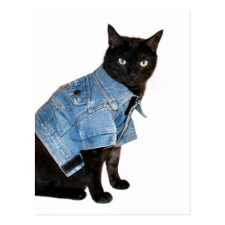biker kitty postcard