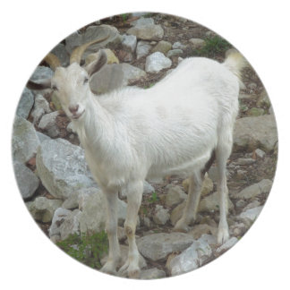 Billy Goat Plate