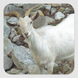 Billy Goat Square Sticker