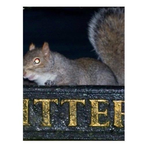 Bin-raid! Cheeky squirrel Postcard