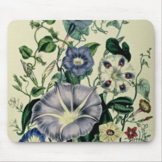 Bindweed, plate 26 from 'The Ladies Mouse Pad