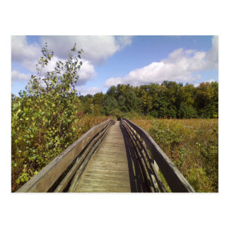 Binghamton University Nature Preserve Postcard
