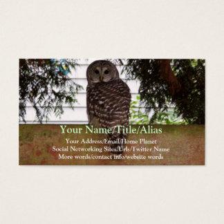 Birch Bay Owl