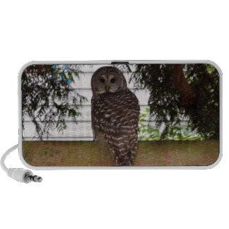 Birch Bay Owl Mp3 Speaker