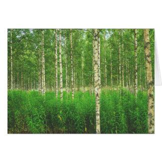 Birch forest card