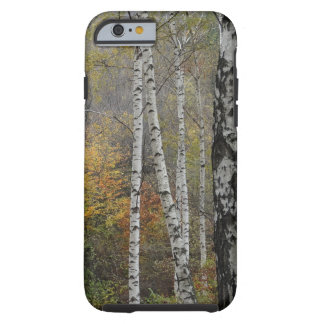 Birch forest Photo iPhone 6/6s, Tough Tough iPhone 6 Case