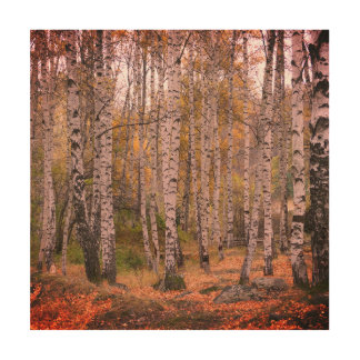 Birch Forrest Photo Wood Wall Art