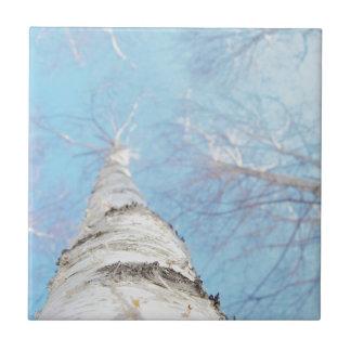 birch tile