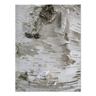 Birch Tree Bark Peeled Old Photo Art