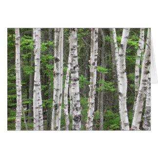 Birch Tree Forest, Maine Card