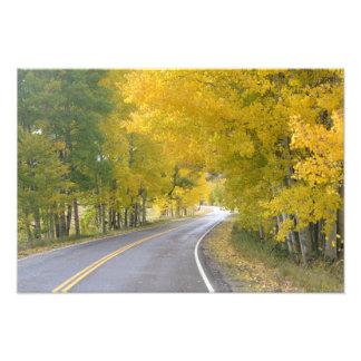 Birch tree lined road photo print