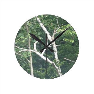 birch tree nature clock