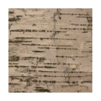 Birch tree texture wood wall art