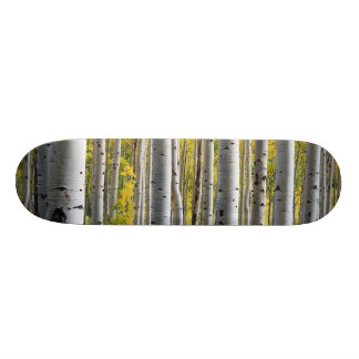Birch trees skateboard deck