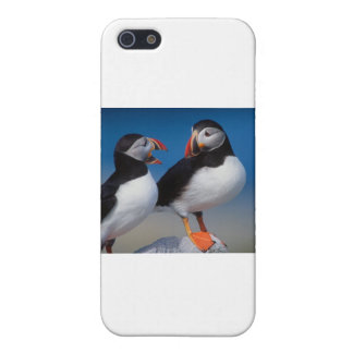 bird a pair of puffins case for iPhone 5/5S
