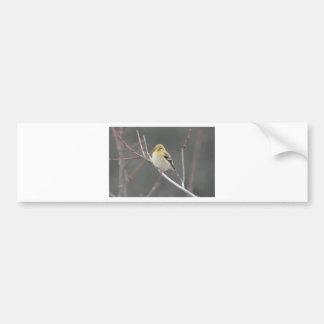 Bird American Goldfinch Nature Bumper Sticker