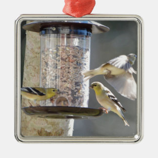 Bird American Goldfinch Nature Metal Ornament