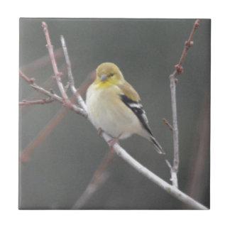 Bird American Goldfinch Nature Small Square Tile