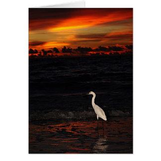 Bird at Sunset Card
