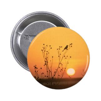 Bird at sunset photograph pinback button