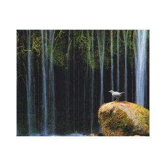 Bird Bath Canvas Prints