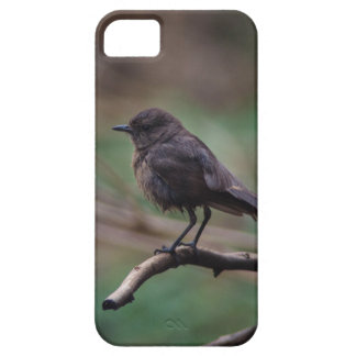 Bird Beauty iPhone 5 Cases