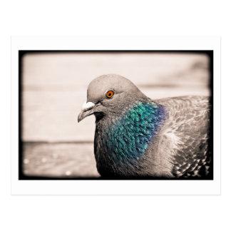 bird by water postcard