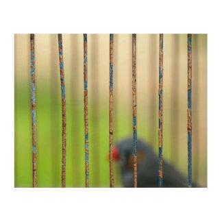 Bird, Cage, bars Wood Wall Art