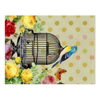 Bird Cage flower Vintage Postcard