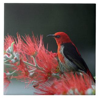 Bird Ceramic Photo Tile