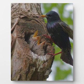bird display plaque