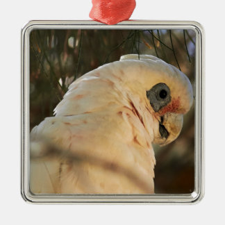 Bird Eyes Silver-Colored Square Decoration