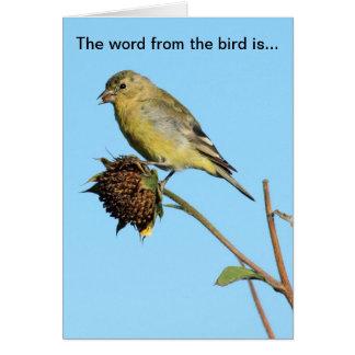 Bird (Finch) on Dried Sunflower Birthday Card