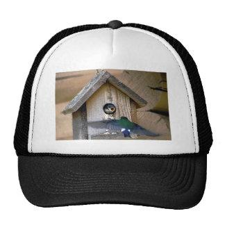 Bird house trucker hats