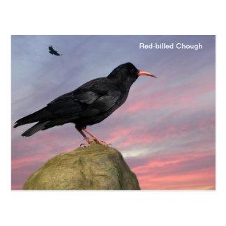 Bird image for postcard