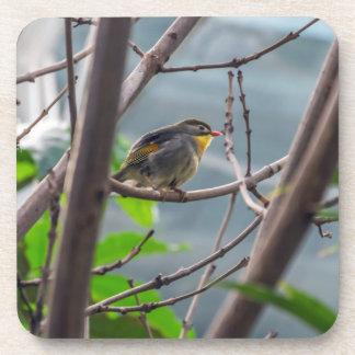 Bird in a tree hard plastic coasters