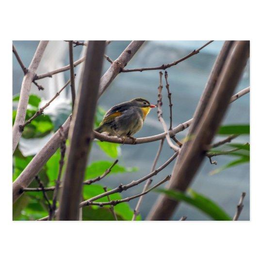 Bird in a tree postcard