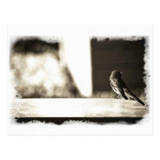 Bird in Sepia Postcard