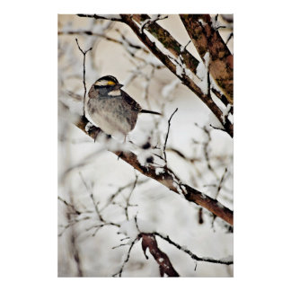 Bird In Snow Covered Tree Print