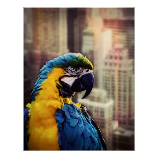 Bird In The City Poster