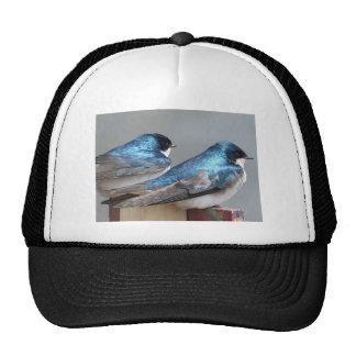 bird.JPG Cap