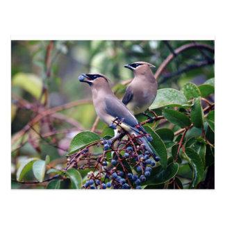 Bird Lunch Postcard
